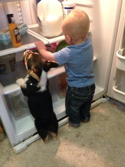 dogs,kids,puppy,parenting,corgi,refrigerator,fridge,g rated