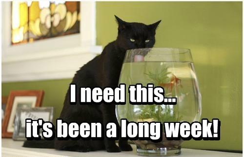 Tgif Lolcats Lol Cat Memes Funny Cats Funny Cat Pictures