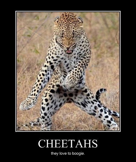 dancing cheetah Cats funny animals - 8270330624