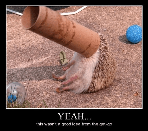 bad idea,hedgehogs,idiots,funny