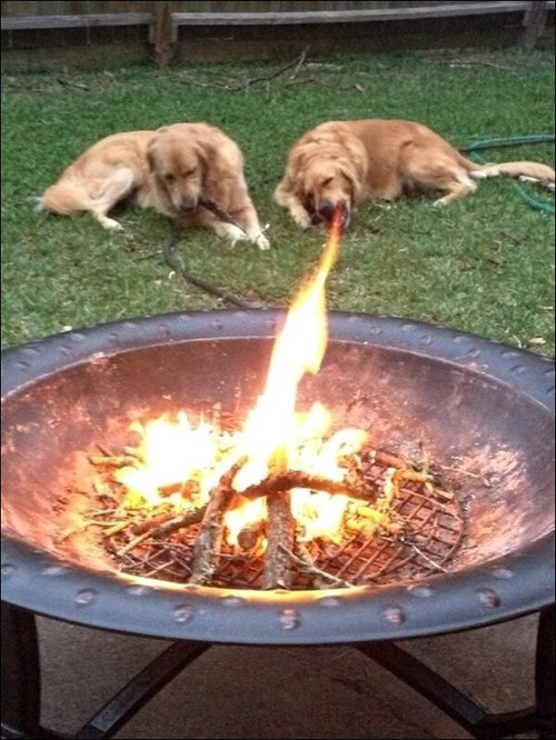 dogs fire Photo funny - 8270350336