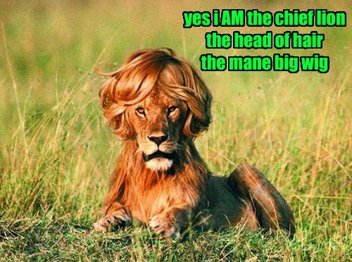hair lions funny mane - 8270418176