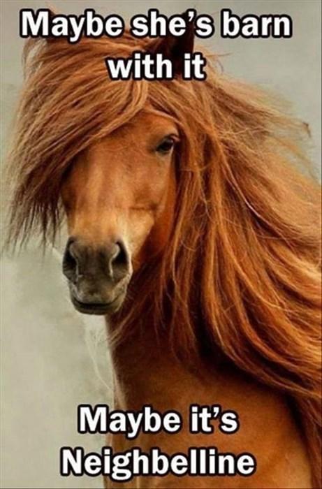 puns beauty horses - 8270460672