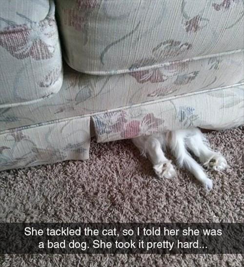 busted ashamed cute - 8270523648