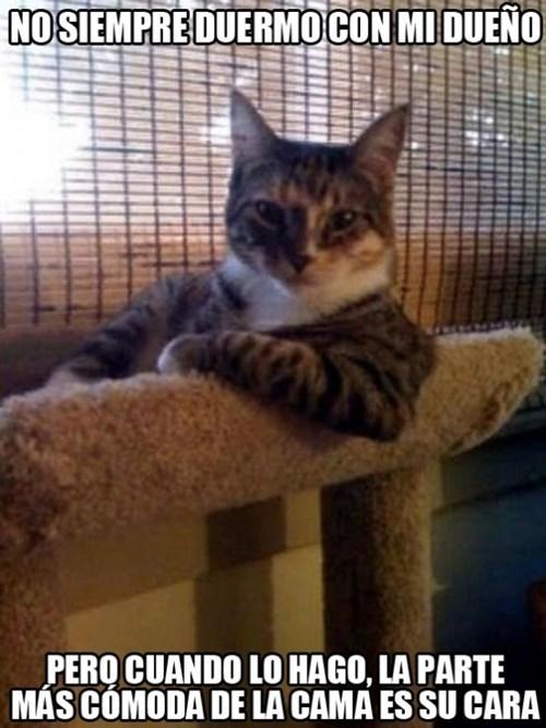 gatos bromas Memes animales - 8270534656