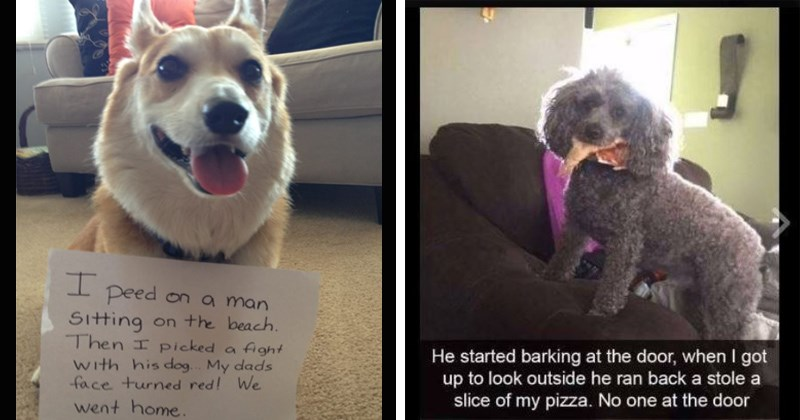 dogs adorable naughty pets puppy funny pics cute dog shaming funny photos puppers - 8270597
