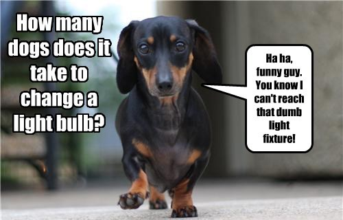 dogs jokes dachshund riddles - 8270723072