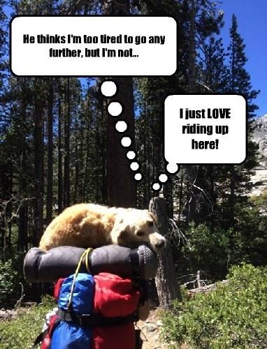 Hiking cute - 8270784256