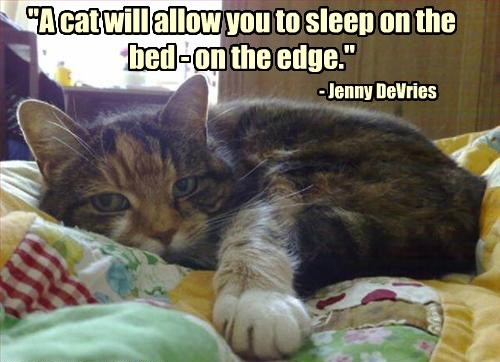"""""""A cat will allow you to sleep on the bed - on the edge."""" - Jenny DeVries"""