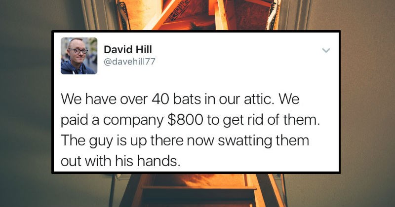 twitter FAIL job Exterminate bats lol incompetence story attic funny animals - 8271109
