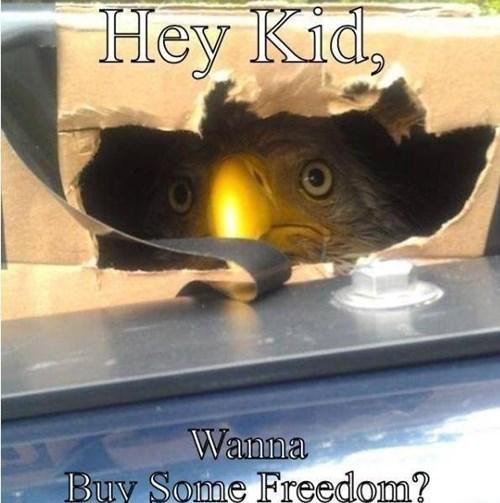 freedom eagles - 8271280896