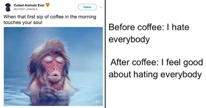 Coffee memes, coffee tweets.