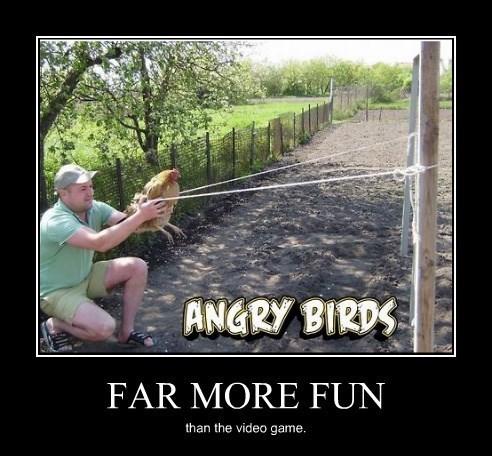angry birds good idea IRL funny - 8271402240