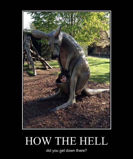 baby kangaroo Joey funny - 8271404288