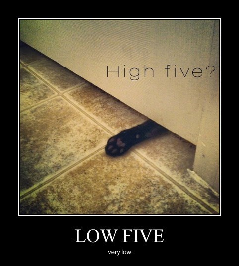 low,high five,Cats,funny