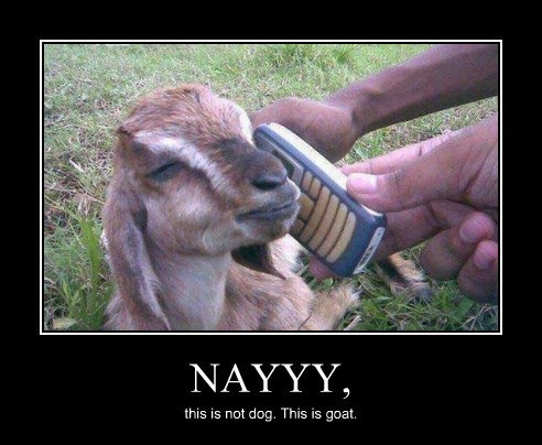 dogs goat phone funny - 8271405056