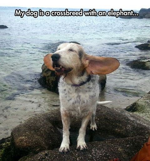 dogs,ears,elephants