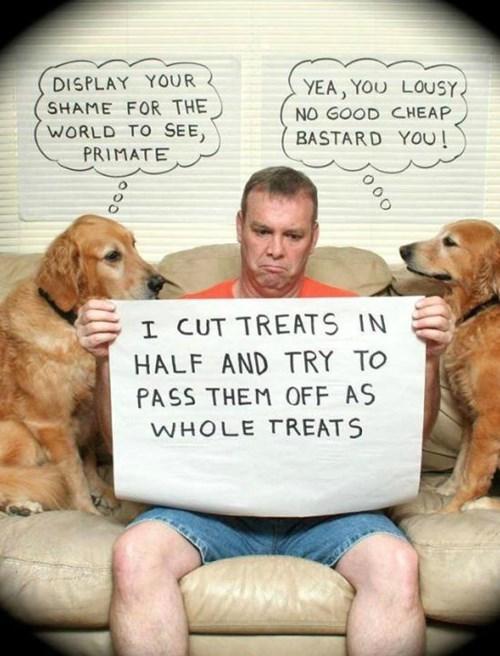 dogs dog treats - 8271488256
