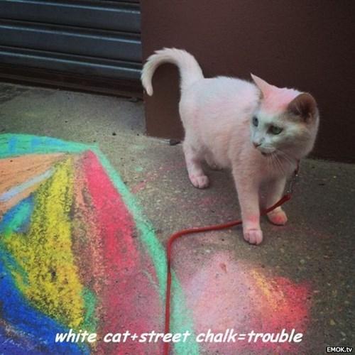 Cats chalk - 8271495936
