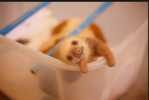 Babies cute sloth - 8271504640