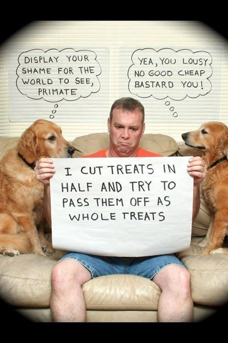 dogs,dog shaming,funny