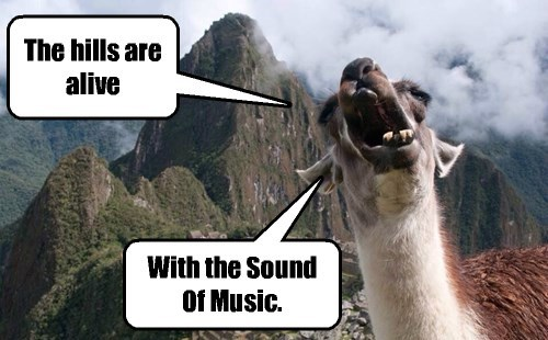 sound of music,llamas,funny