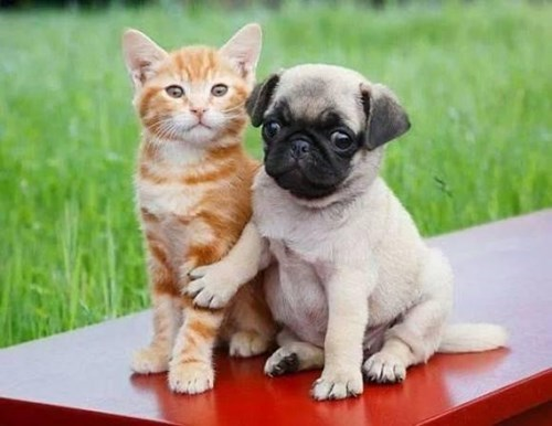dogs friends cute Cats - 8271946496