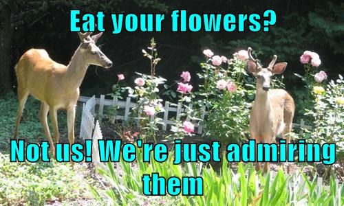 Eat your flowers? Not us! We're just admiring them