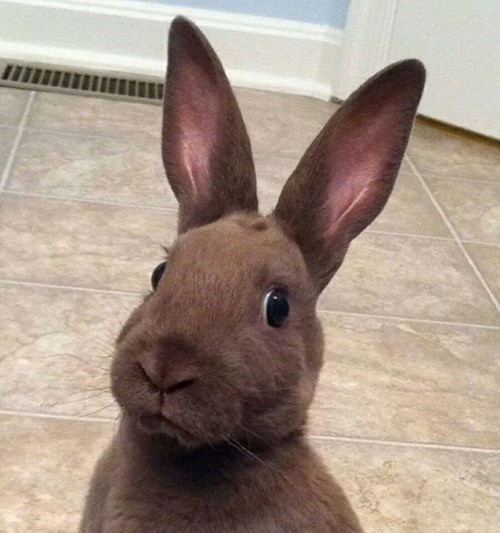 Did Somebody Say Carrots?