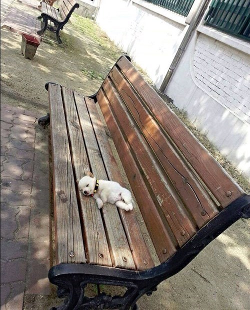 puppies cute sleeping bench - 8272719360
