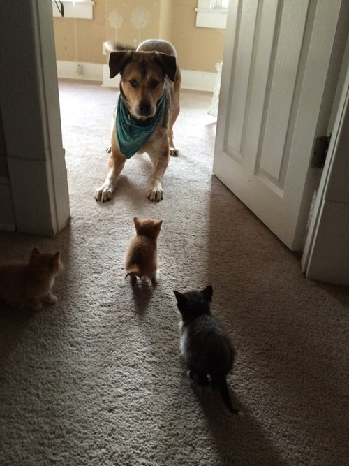 dogs,kitten,cute,Cats