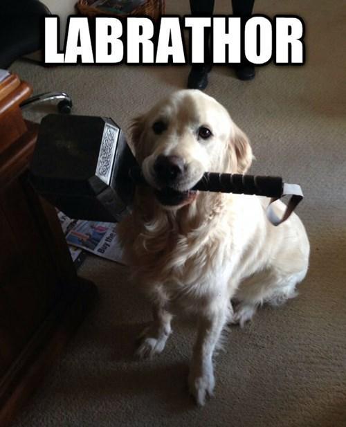 dogs Thor labrador puns funny - 8272749568