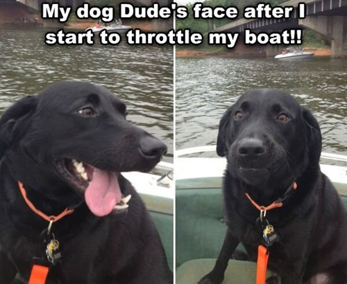 dogs funny boats - 8272755456