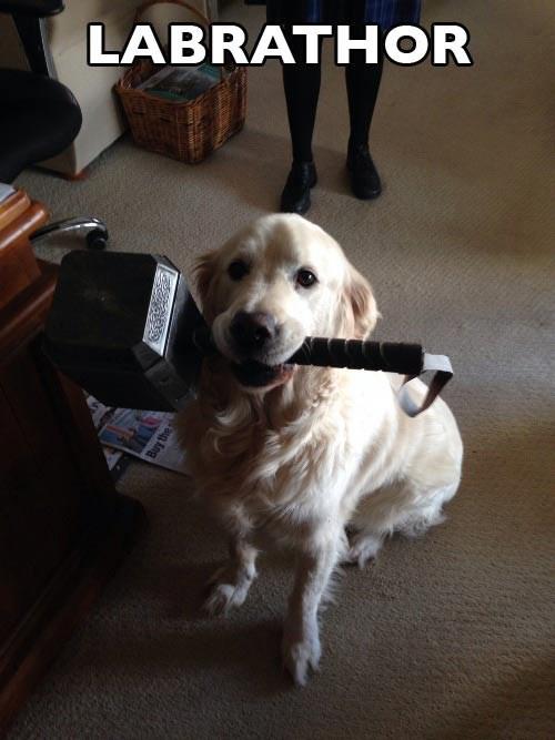 dogs Thor pun - 8273056000