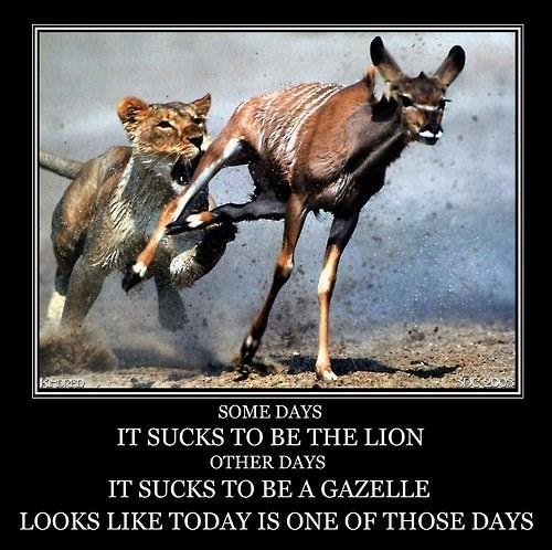 life sucks gazelle lion funny - 8273776640