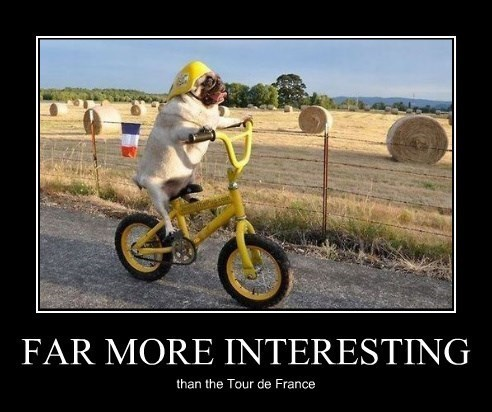 dogs tour de france pugs funny - 8273778432
