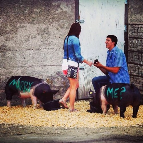 pig,proposal,funny