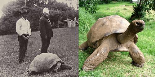 pics tortoise animals - 8273864704