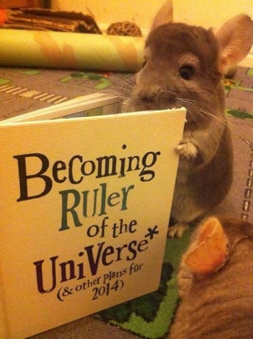 cute books chinchilla - 8273869056