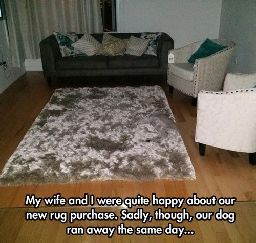 dogs,lost dog,rugs,camouflage,funny