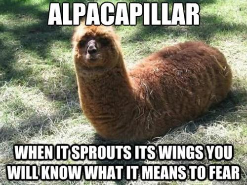 llama cute funny caterpillar - 8273943808