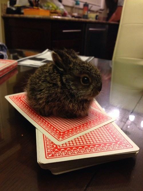 cute cards rabbits - 8273969920