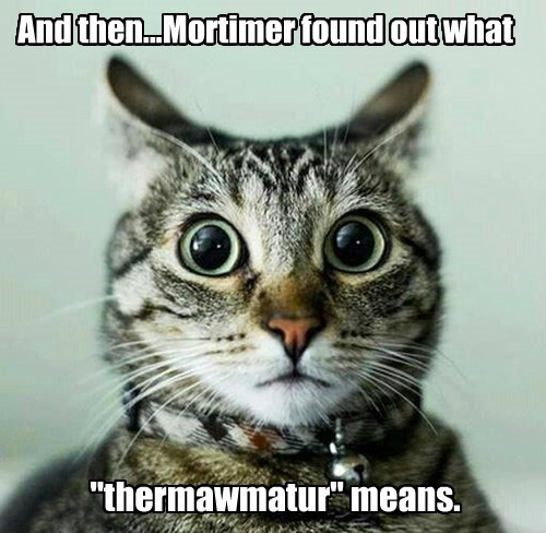 "And then...Mortimer found out what ""thermawmatur"" means."