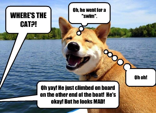 busted dogs summer swimming Cats - 8274137088