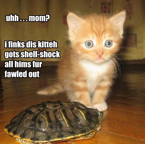 kitten turtles cute funny - 8274154240