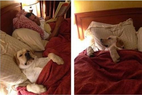 fotos animales perros bromas - 8274769664