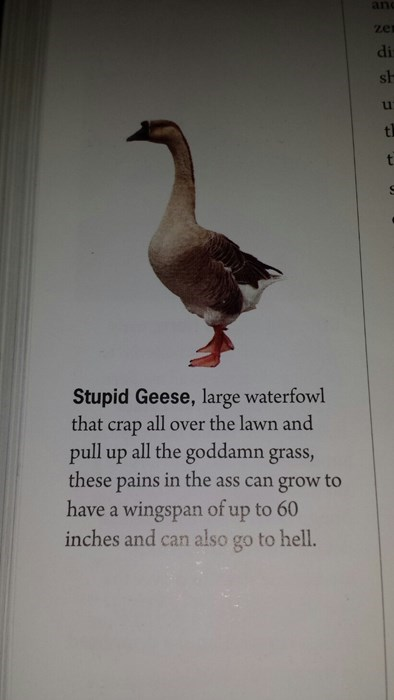 birds funny geese jerks textbook g rated