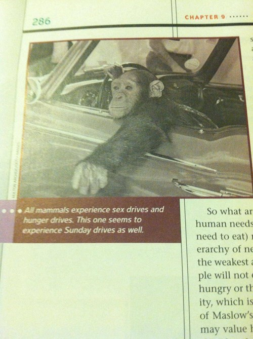 driving,funny,monkey,sex drive