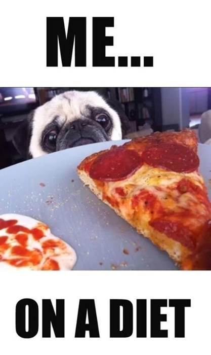 cute diet dogs funny pizza - 8274867456
