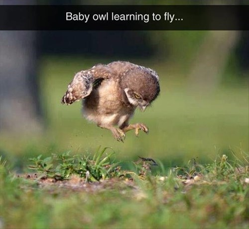 cute chick flying learning Owl - 8274926336